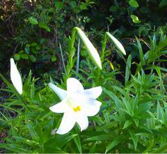 球美の里の花