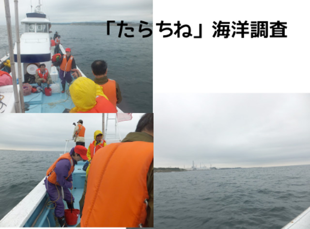 たらちね海洋汚染の調査